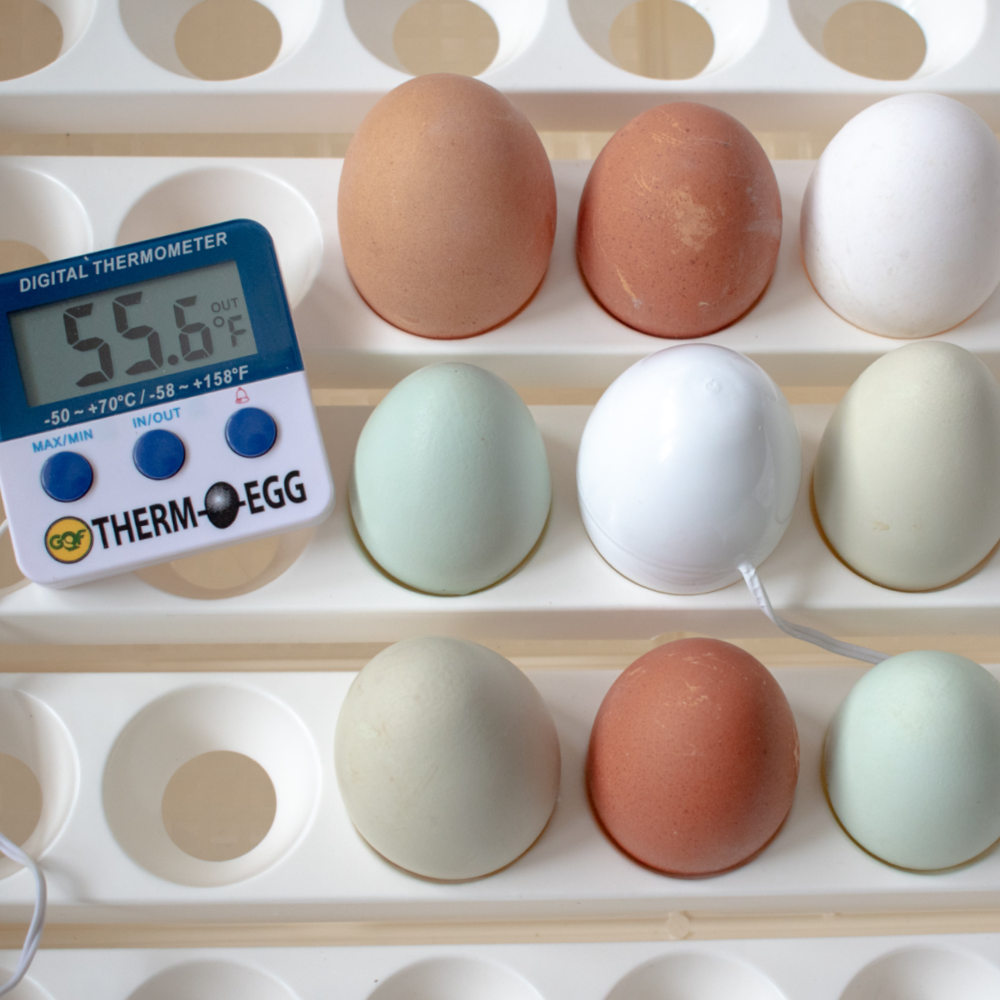 GQF 3550 Thermo-Egg Thermometer