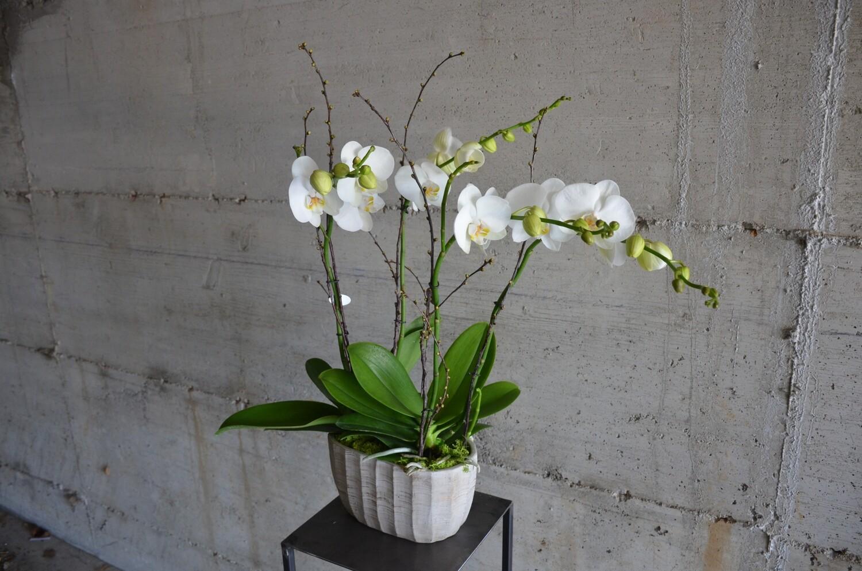 Piante in vaso / Plants in pot