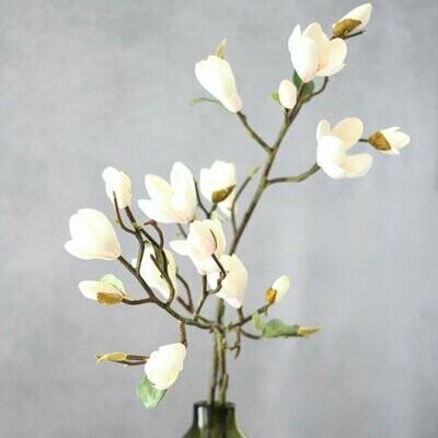 Tall White Magnolia Branch