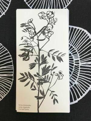Siri Greeting Card Oval-Leaf Cassia