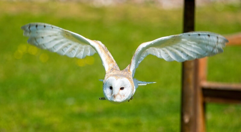 Taster Special One Hour Bird of Prey Experience - Adult