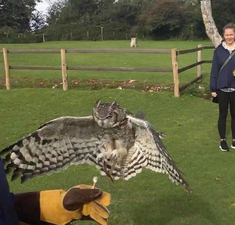 One night B&B and Half Day Bird of Prey Experience for Two