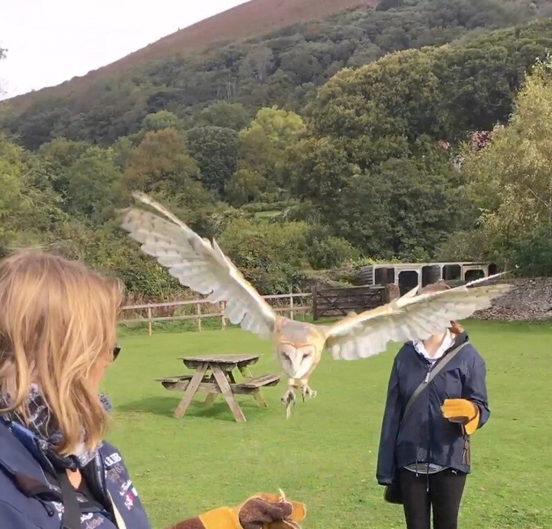 Half Day Horse Ride and Half Day Bird of Prey Experience, with One Night B&B for Two