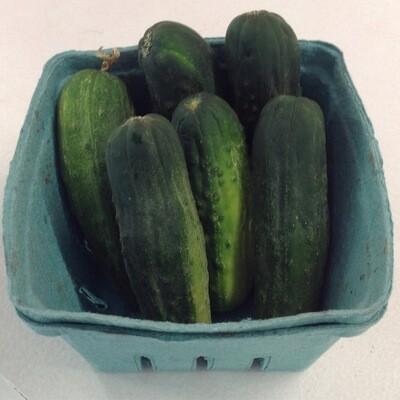 Cucumber - Quart about 7