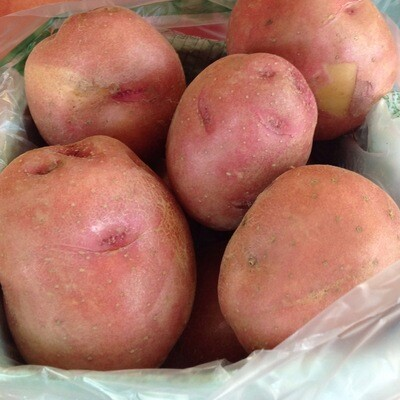 Potato - Quart