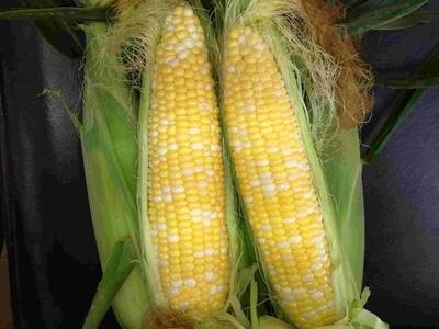 Corn - 4 each