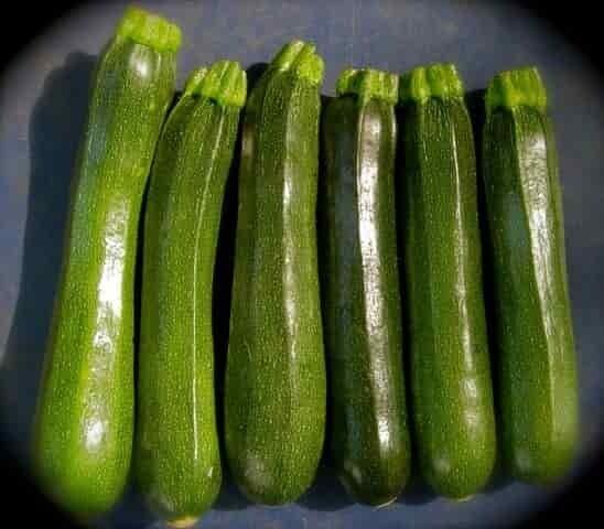 Squash Zucchini - Quart