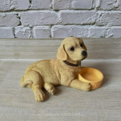 Yellow Labrador Puppy Laying With Food Bowl Gift Boxed