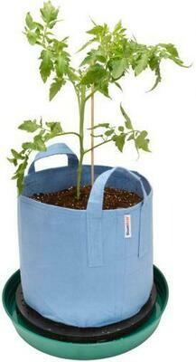 BloomBoss Black Clean Roots Plant Platform