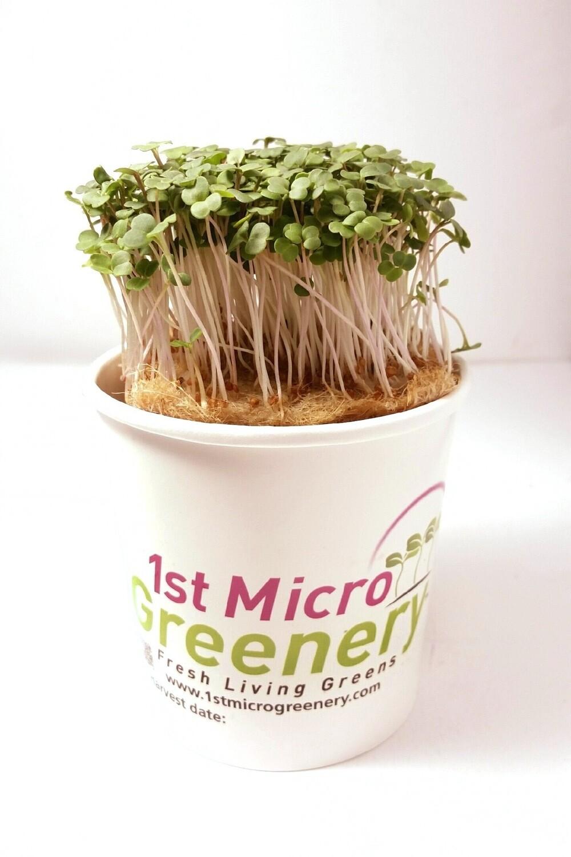 Amazing Arugula Micro Greens Superfood Snacks and Seasonings
