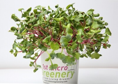 Radical Radish Micro Greens Superfood Snacks and Seasonings