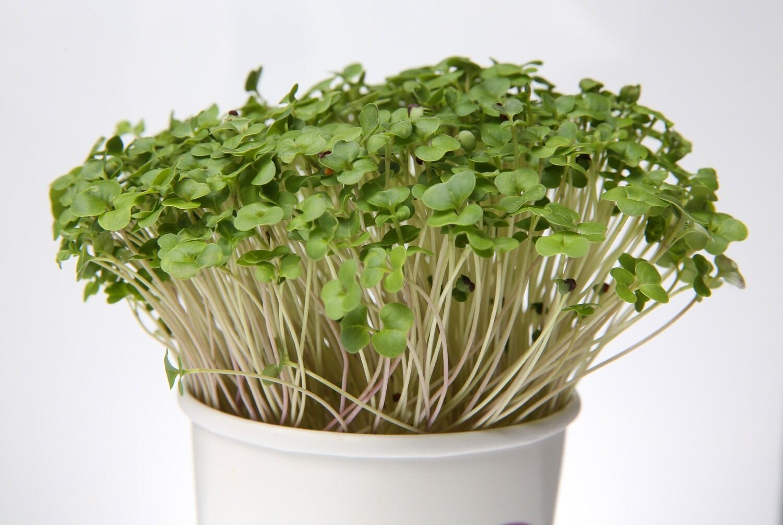 Bold Broccoli Micro Greens Superfood Snacks and Seasonings