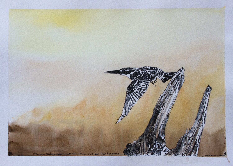 Flight of the Kingfisher