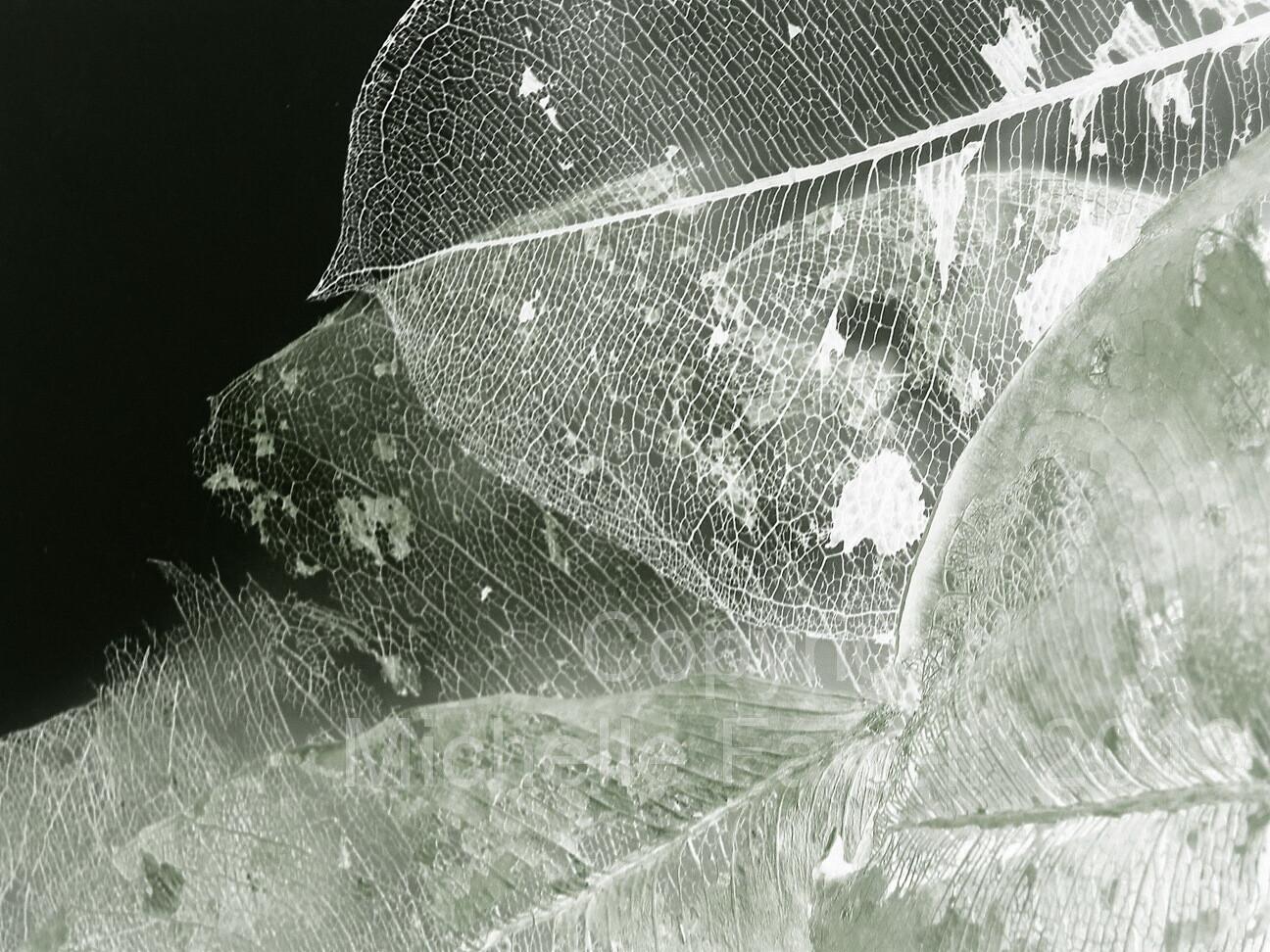 Art Print - Etheric Leaves - Ltd Ed
