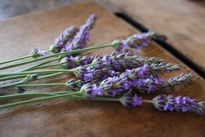 Essential Oil, Lavender 10ml Organic