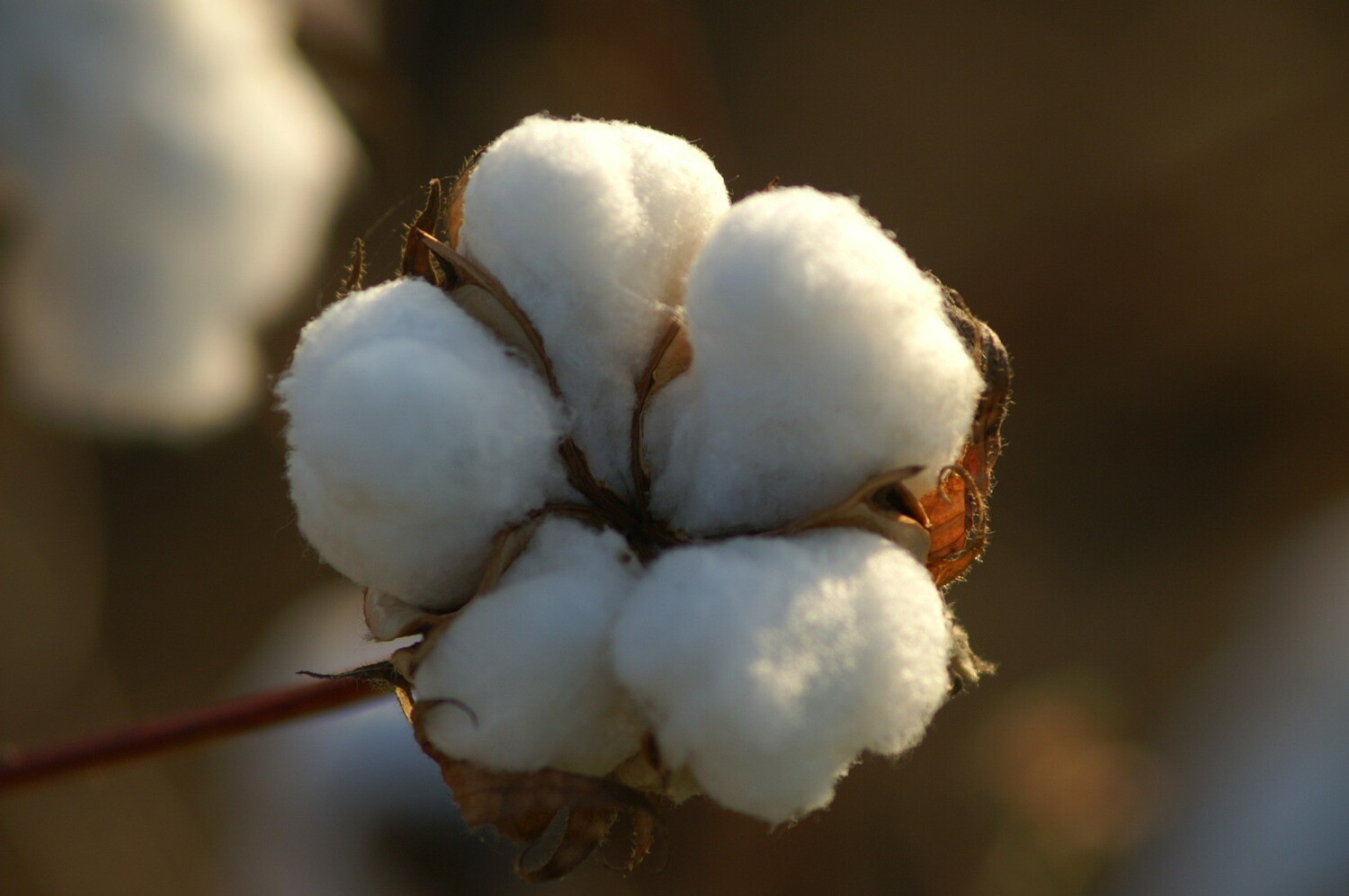 """Cotton Blossom scented - 11"""" Intense Incense Sticks and small Cones - Made Fresh to Order"""