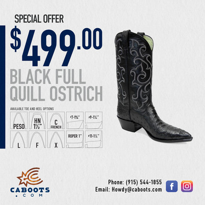 Black Full Quill Ostrich SPECIAL $499