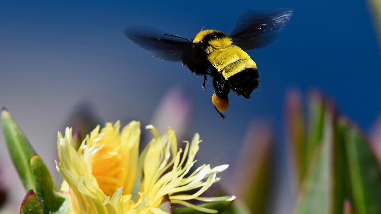 BEE FREE