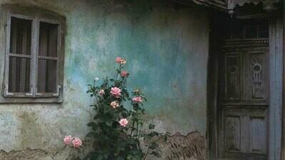Croatian Rose