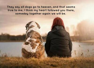 In Memory of Your Dog
