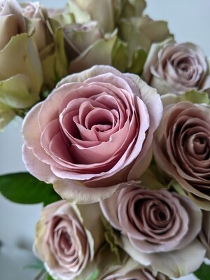 AMNESIA - Rose of the Week! (Multiple Sizes)