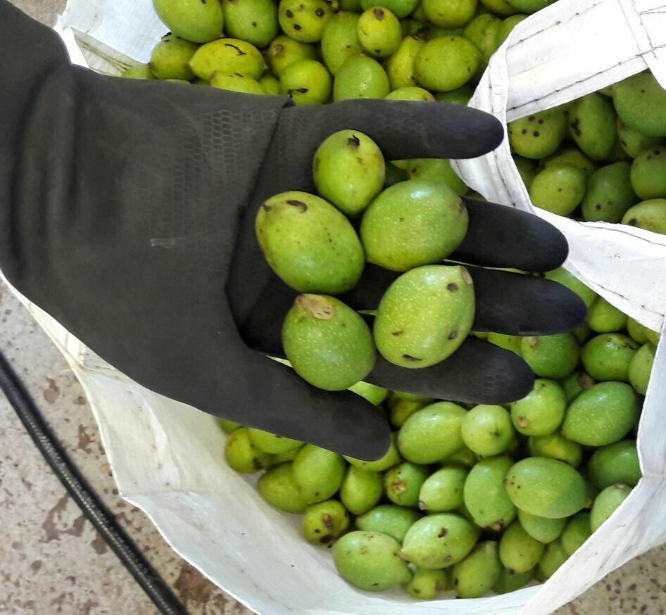 Green Walnuts Small Pack