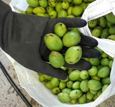 Green Walnuts 2kg+