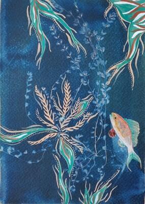 Sailfin Anthias gouache Art Print