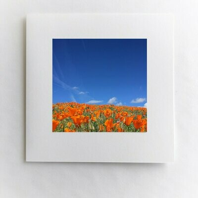 Poppies To The Sky Card