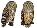 Jabebo Barred Owl Earrings