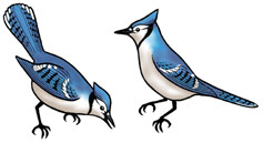 Jabebo Blue Jay Earrings