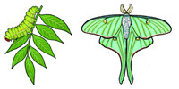 Jabebo Luna Moth Earrings