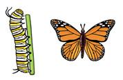 Jabebo Monarch Butterfly Earrings