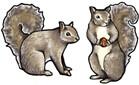 Jabebo Squirrel Earrings