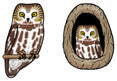Jabebo Saw-whet Owl Earrings