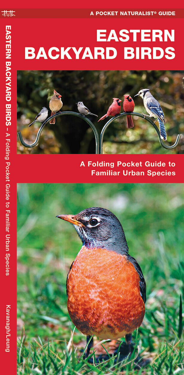 Pocket Naturalist: Eastern Backyard Birds