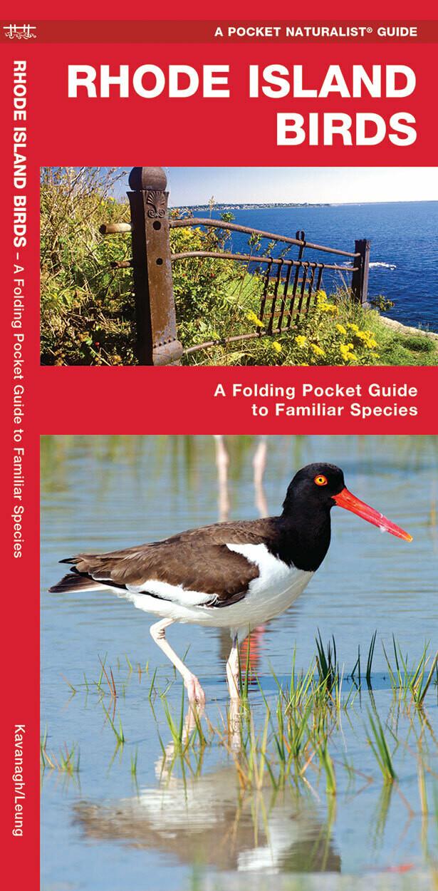 Pocket Naturalist: Rhode Island Birds