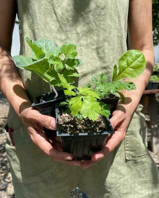 Planta orgánica de temporada
