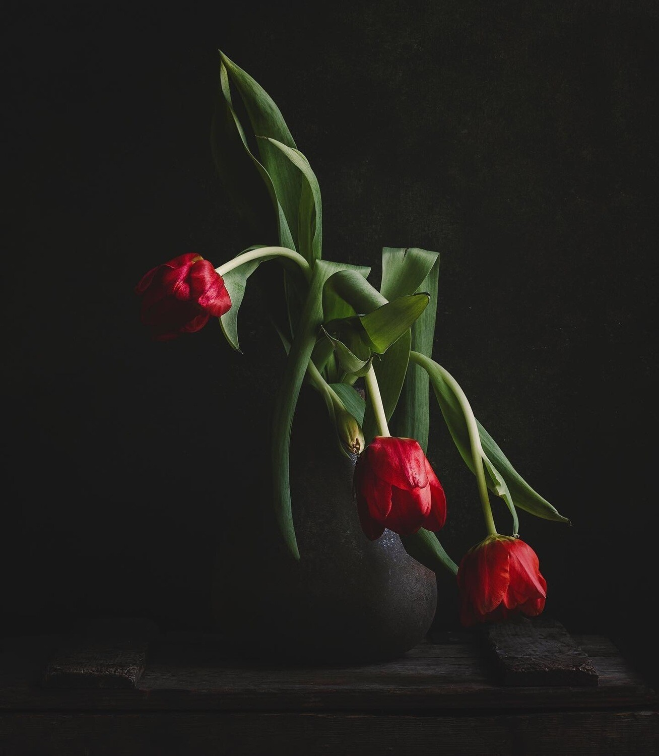 The Bowing Tulip