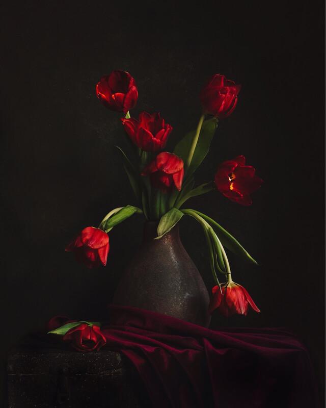 Imperfect Tulip