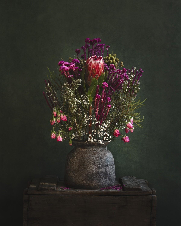 Blushing Protea