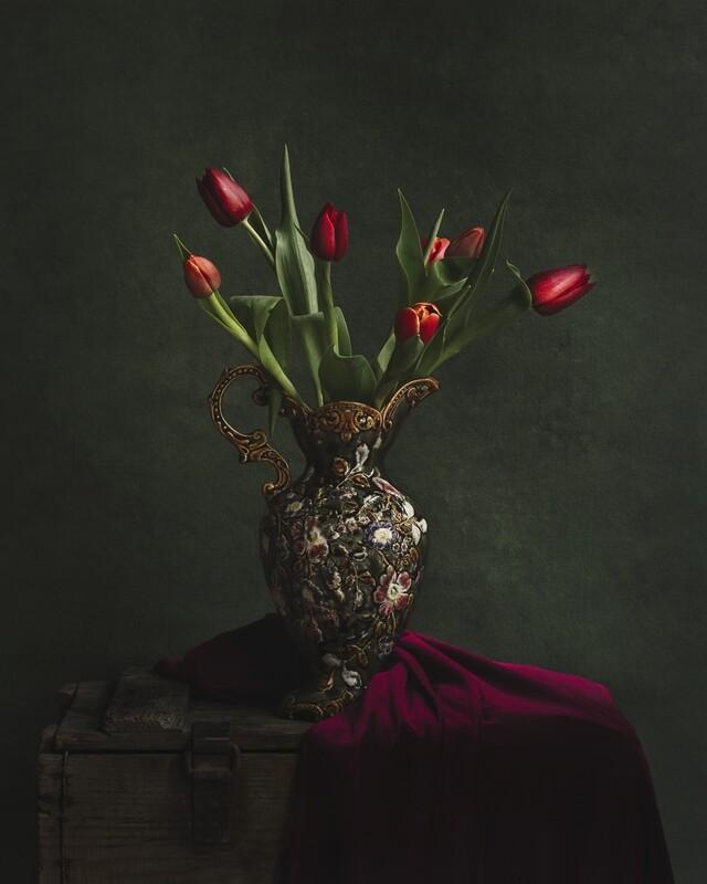 Regal Tulip