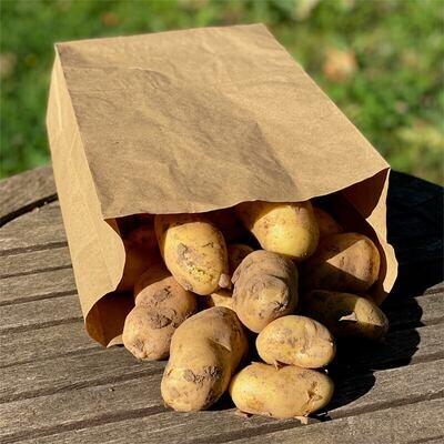 """Pommes de terre """"primeur"""""""