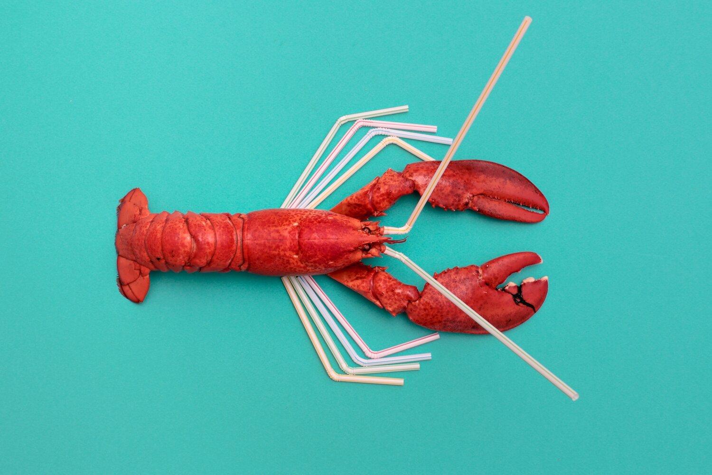 Straw Lobster