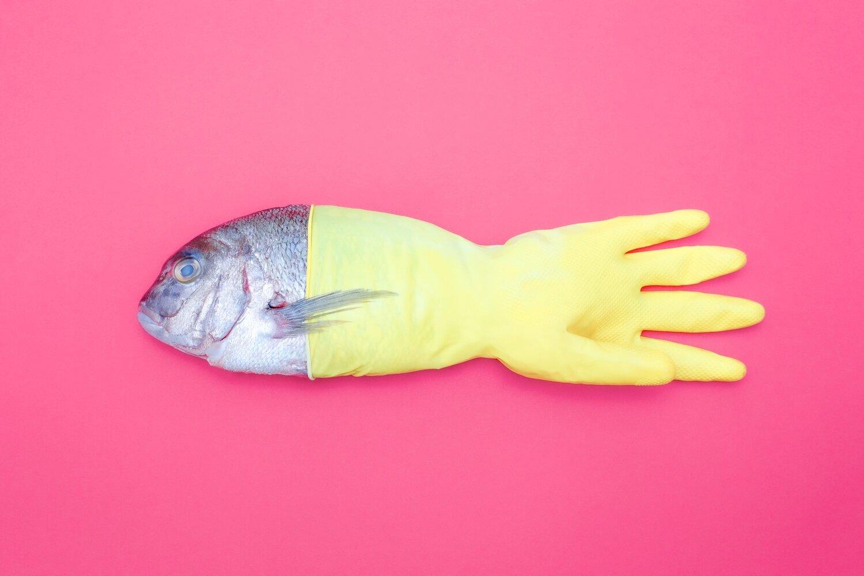Glove Fish