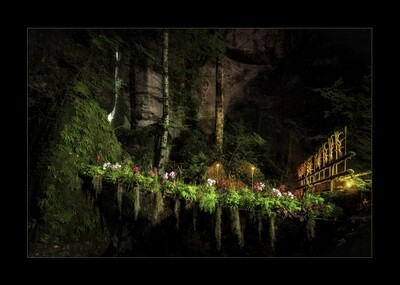 Parkwald2 - Brücke im Wald