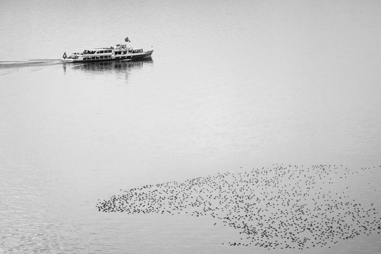 MS Petersinsel und Kormorane