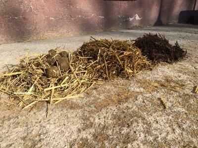 Methodenbeschreibung zur Pferdemist Kompostierung, Wirtschaftsdünger