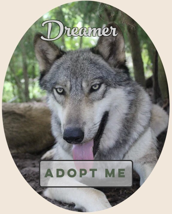 Adopt a Seacrest Wolf