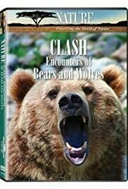 """""""Clash: Encounters of Bears and Wolves"""" DVD"""